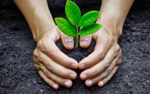 Николаевщина присоединилась к проекту «Озеленение планеты»